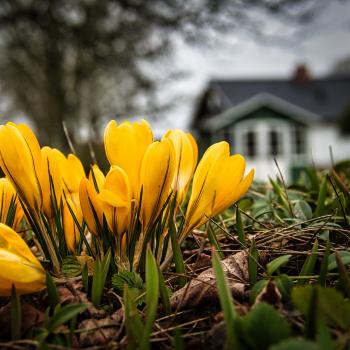Forår.